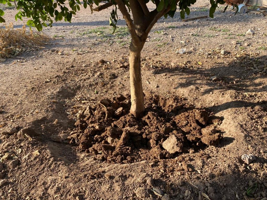 ISONEM SOIL WATER TRAP Application Photos
