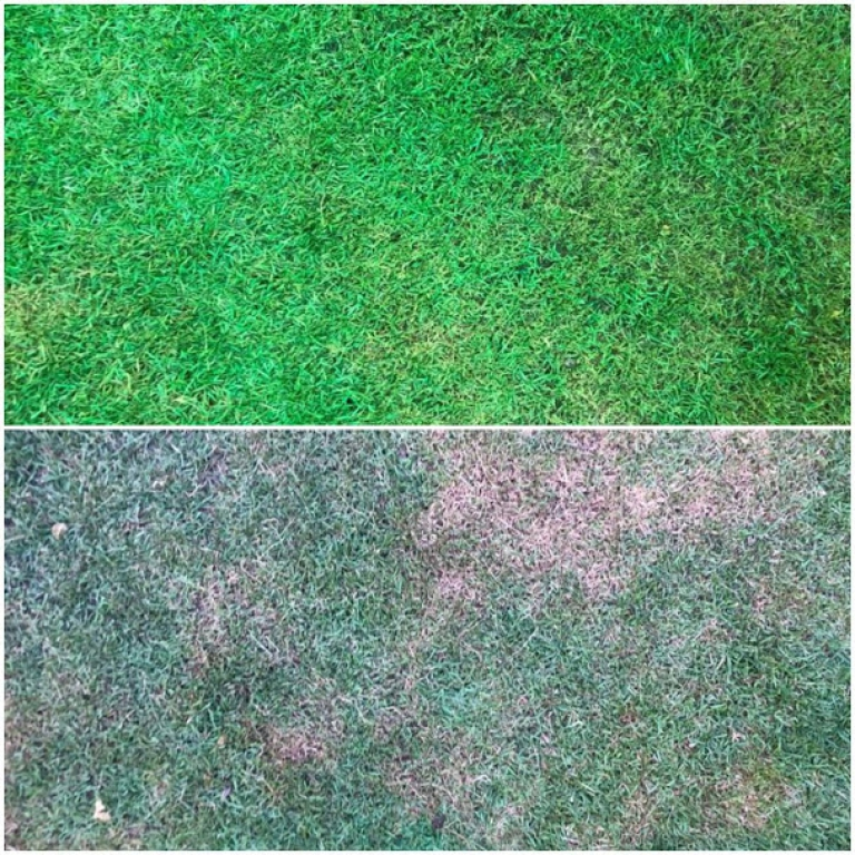 ISONEM GRASS PAINT Application Photos